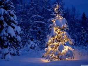 Snow Christmas Tree Desktop Wallpaper